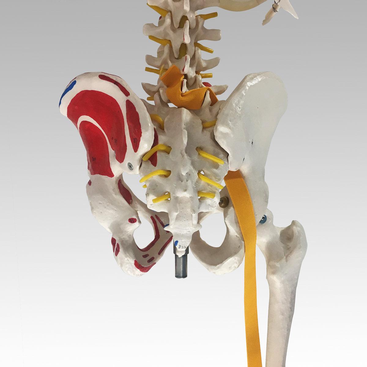 nerw-kulszowy